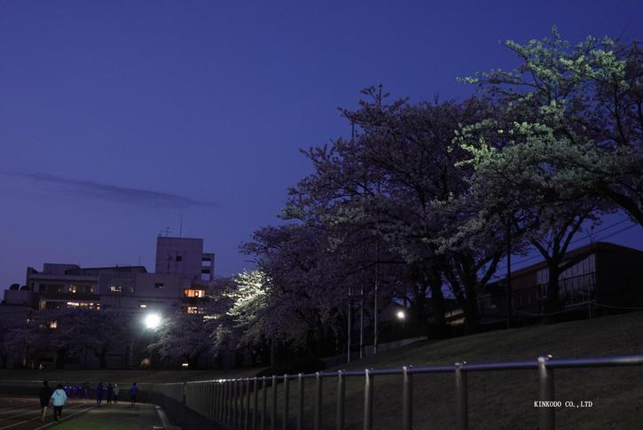 2021sakura12.jpg