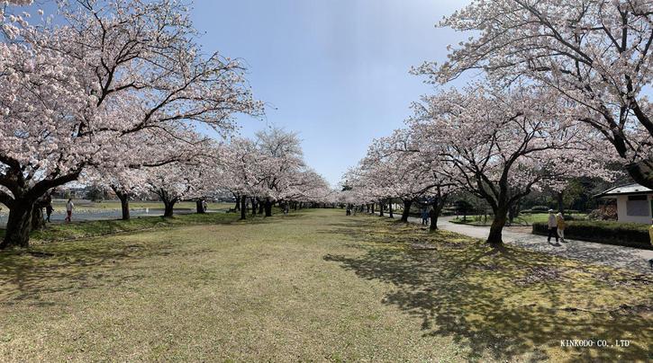 2021sakura4.jpg