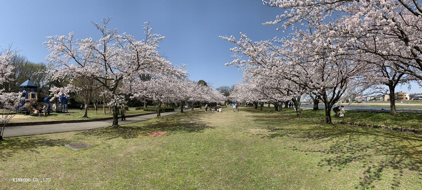 https://www.kinkodo.jp/blog/images/2021sakura31.jpg